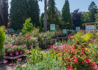 Outdoor Plant Centre